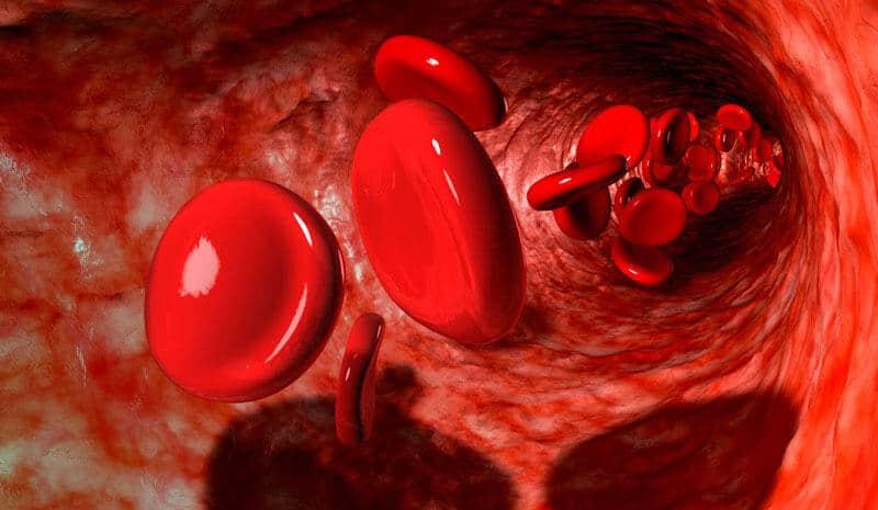 Как Ентан укрепва кръвоносните съдове