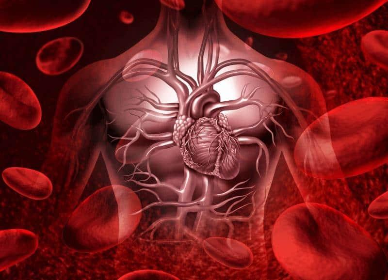 кръвта