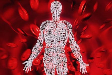 кръвообращение